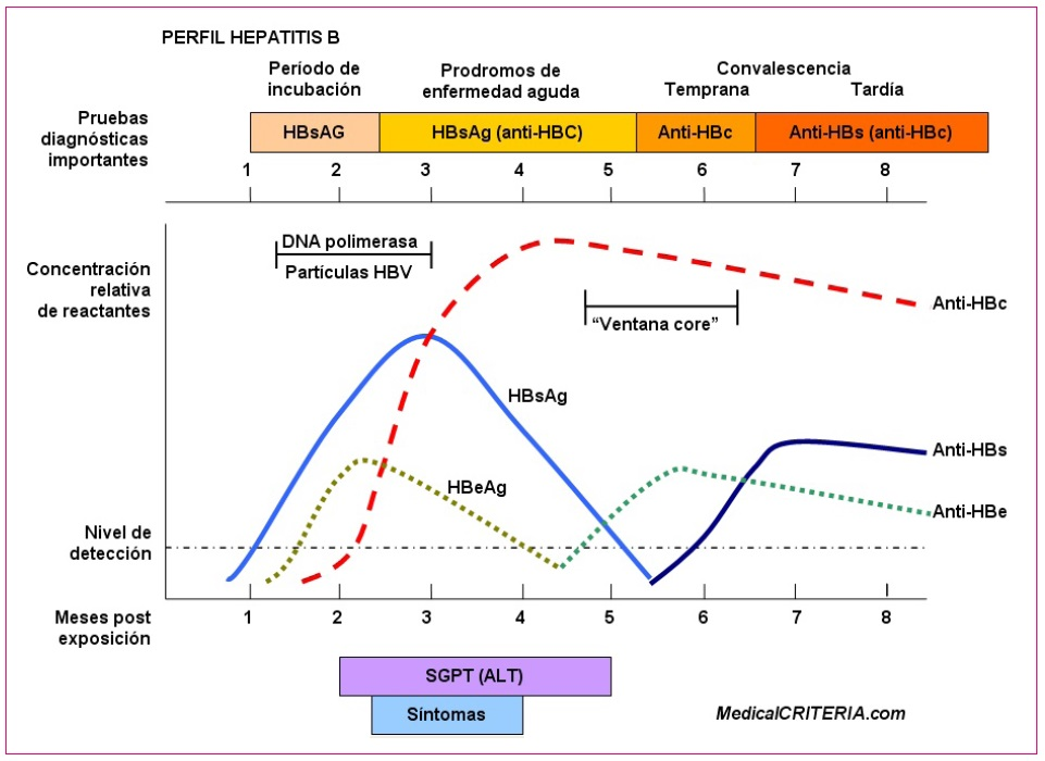 Figura 2. Historia natural de la hepatitis B.